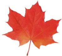 120921-canada-maple-leaf